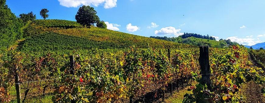 Torrazzetta - Italian Organic Wines Online Store, Pavia, Lombardy, Italy Oltrepò Pavese