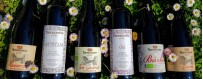 Red Wines Online Sale - Organic Wines Oltrepò Pavese, Pavia, Lombardy, Italy